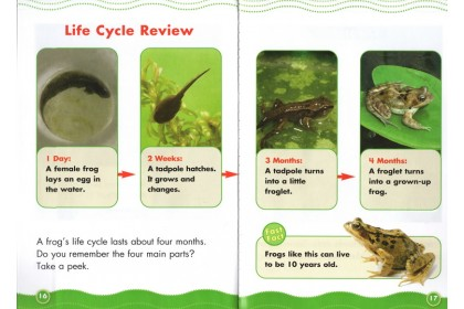 Science Vocabulary Readers: Life Cycles (6 books)