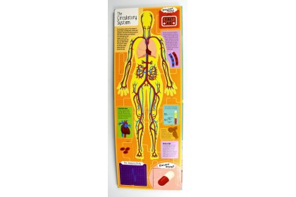 The Human Body (A Lift-the-Flap Book)
